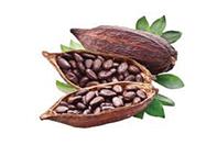 kakao - Fit Fast